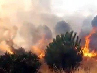 İzmir, Çiğli'de Makilik Alanda Yangın