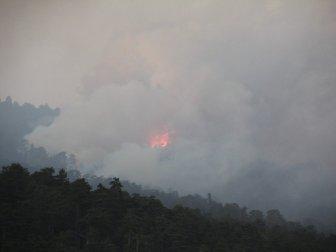 Kütahya'da Çıkan Orman Yangını Bilecik Sınırına Ulaştı
