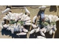 Tzob'dan Kurbanlık Hayvan Sayılarına İlişkin Açıklama