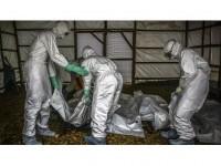 Kongo Demokratik Cumhuriyeti'nde Ebola Alarmı Sürüyor