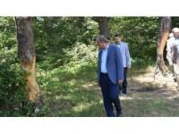 Tokat Valiliğinden Çam Ağaçlarına Zarar Verilmesine İlişkin Açıklama