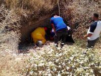 Yaralı Köpeği AFAD Ekibi Kurtardı