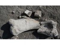 Keçi Çobanı 'Milyon Yıllık Fosil' Buldu