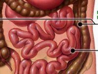 Bağırsaklarınızdan kanser riski yaratan kilolarca atığı temizlemek için iki malzeme